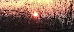 RENNTIER.DE - Sonnenuntergang Kronberg