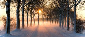 RENNTIER.DE - Winterlandschaft